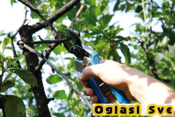 Profesionalno orezivanje i zaštita vinove loze, voća i ruža, obaranje debelih stabala i šišanje živih ograda povoljno!